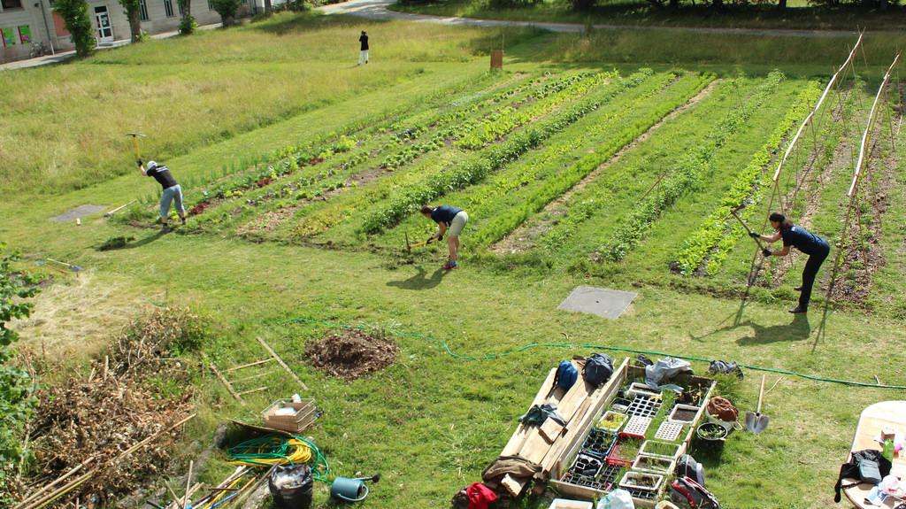 Une ferme dans la ville : petit itinéraire de l'agriculture urbaine